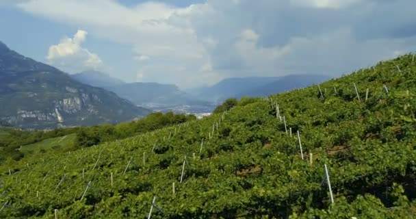 Letecká hukot video z vinice plantáží v severní Itálii. Červená tmavá vinných hroznů na stromě na plantáži hrozny v Itálii