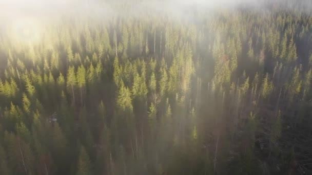 Létání nad mraky. Film vzdušné DRONY 4k východu, mlhavé ráno a lesa v horách