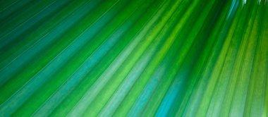 """Картина, постер, плакат, фотообои """"текстура ярко-зеленых тропических листьев. летний вегетативный фон. естественный летний и весенний фон . постеры печать фотографии города"""", артикул 308700322"""