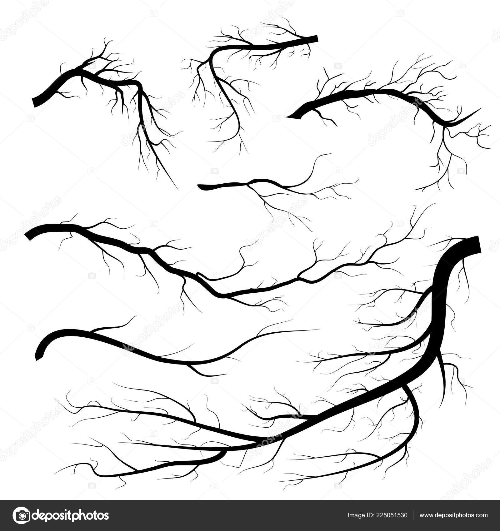 Set Of Dry Twigs On White Background Trees Branch Silhouette