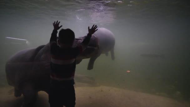 Menschen sehen nachgeahmte Tierwelt von lizenzierten Aussichtspunkten, Junge mit Bewunderung schaut Flusspferde im Aquarium an