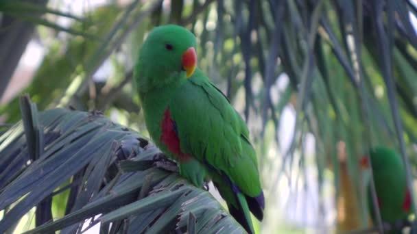 Bird of tropical rainforest green parrot sits on palm branch