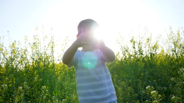 little boy collects flowering herb outdoors, child on meadow closeup pulls grass, beautiful kid walking on field in sunshiny day