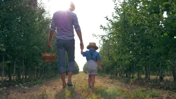 családi kapcsolatok apa és fia, apa és gyermek sétálni sorok között a fák egy kosár gyümölcs háttérvilágításban az almakert