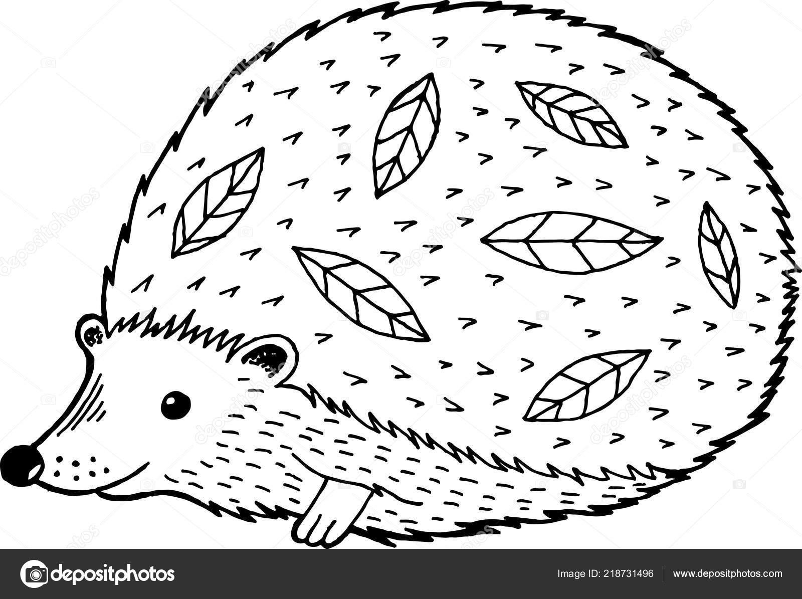 Cartoon Igel Malvorlagen Für Kinder Und Erwachsene Vektor