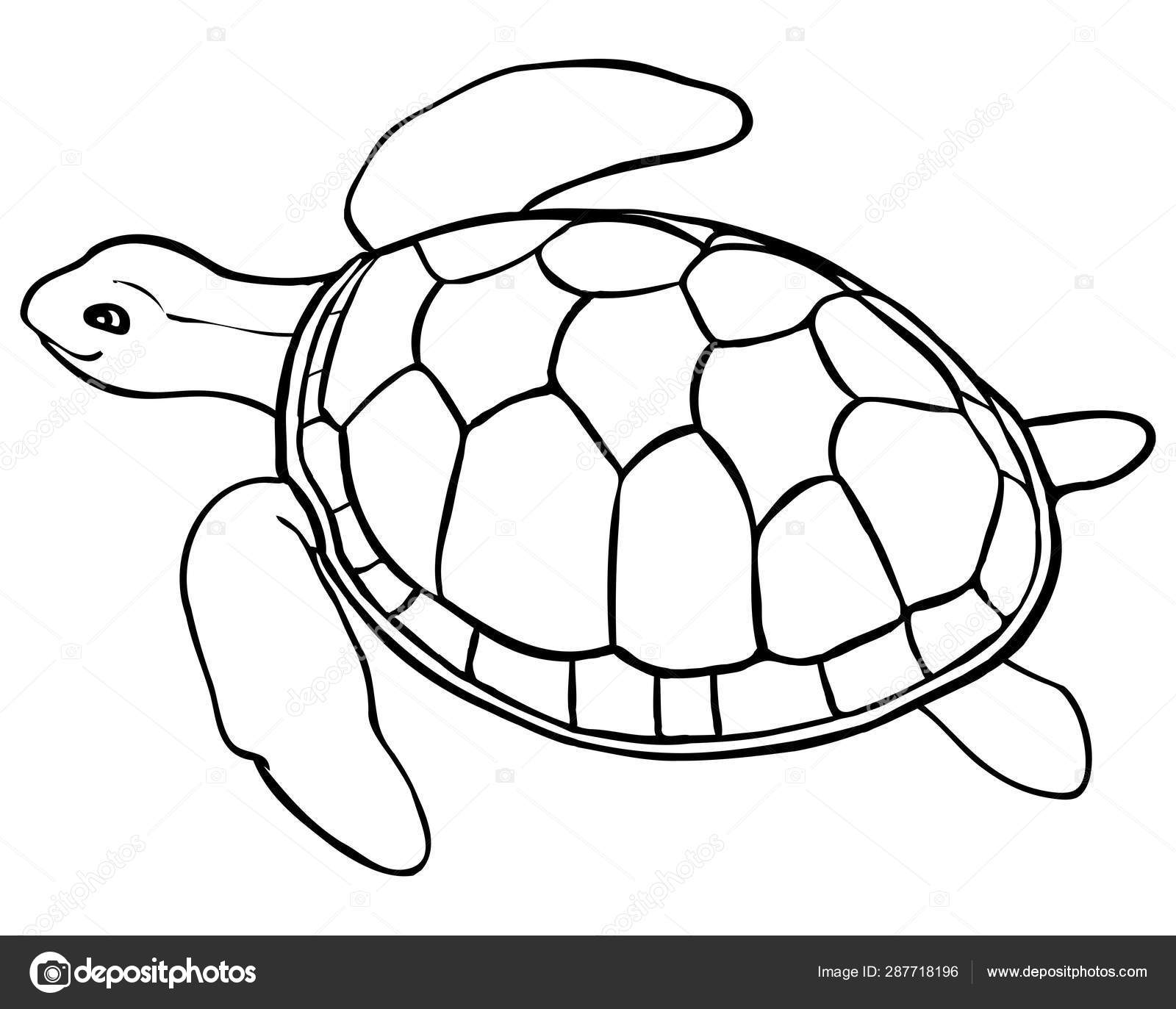 - Contour Turtle - Coloring Page For Kids, Line Art — Stock Vector