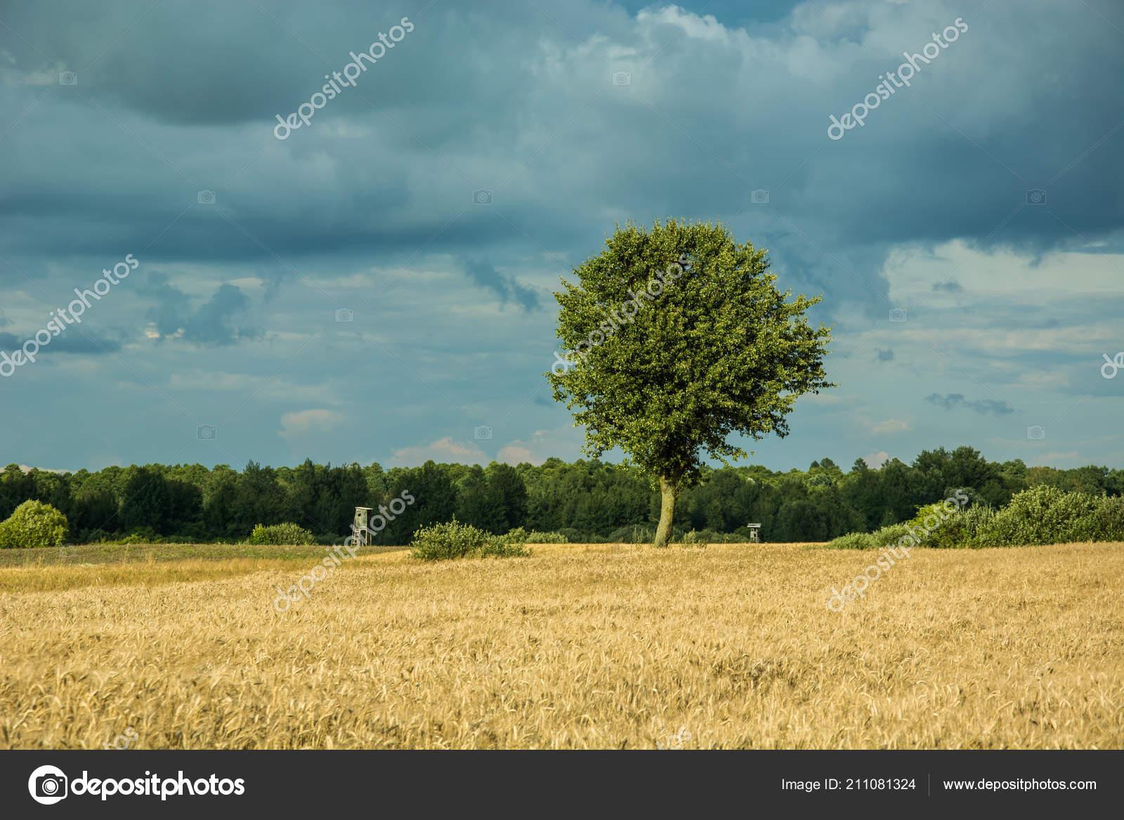 jeden strom