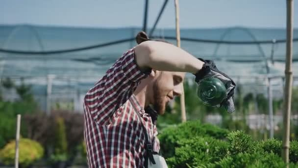 Young bearded male gardener in casual wear protecting gloves huge big botanical greenhouse garden takes. Gardener pours plants.