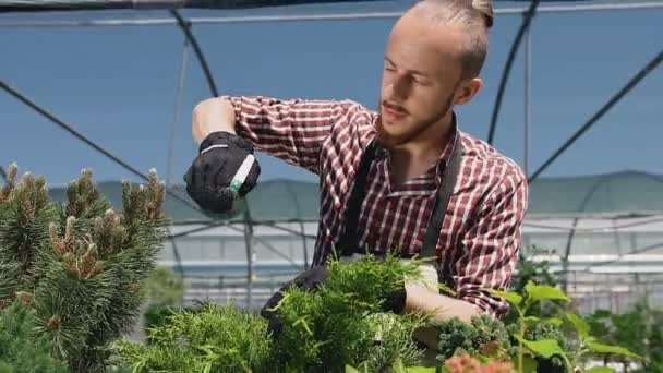 Portrait of a beautiful man in a garden apron that watered plants in a large greenhouse. Sunny day, beautiful light, stabilized camera movement.