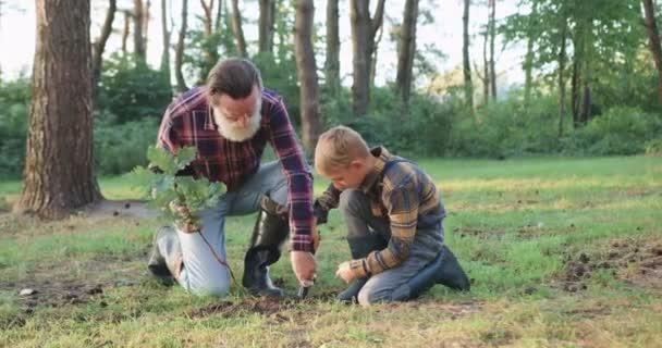 Vorderansicht des attraktiven respektierten alten bärtigen Opas, der seinem hübschen kleinen hellhaarigen Enkelkind im Park hilft, ein Loch für Eichensetzlinge zu graben