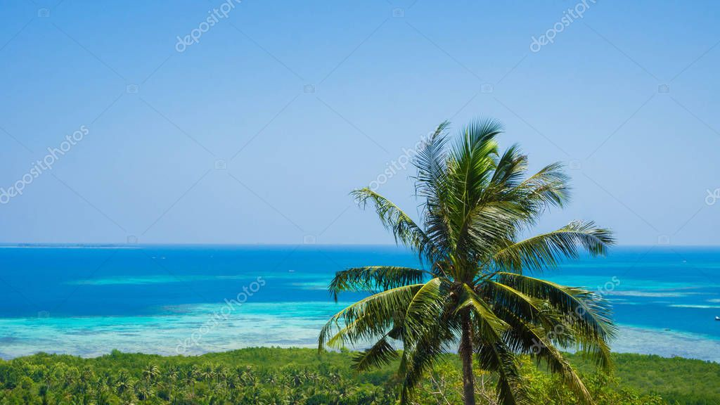 a beautiful palm tree coconut with green forest aerial view sea landscape with blue water sea in sunny day in karimun jawa indonesia