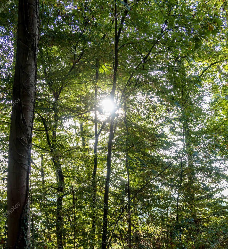 Sun casting light through the trees - Saint Germain Forest, France.