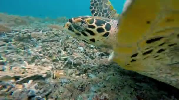 Sea turtle on coral reef