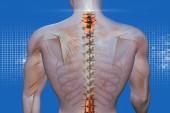 anatomické vizi zpět bolest