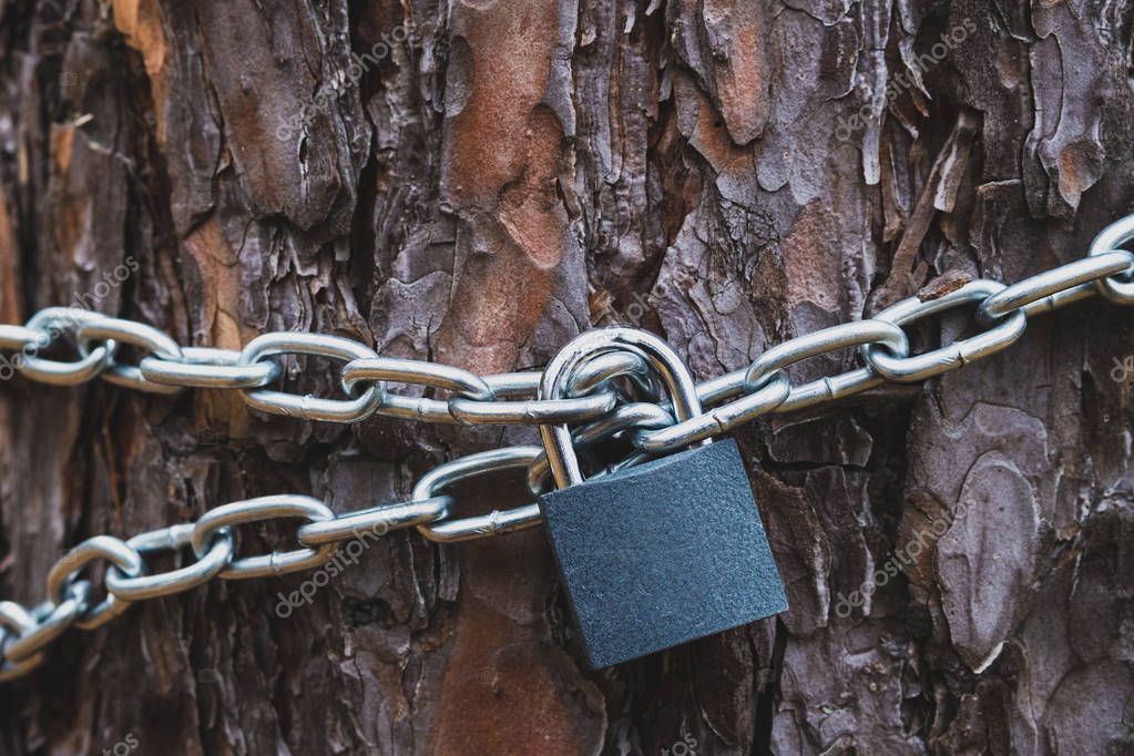 the texture of pine bark on the tree trunk, around the trunk is wound a chain that is closed on a padlock