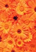 Fotografie Seamless background of ripe orange flowers