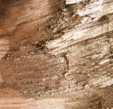 abstract  Brown Wood Background