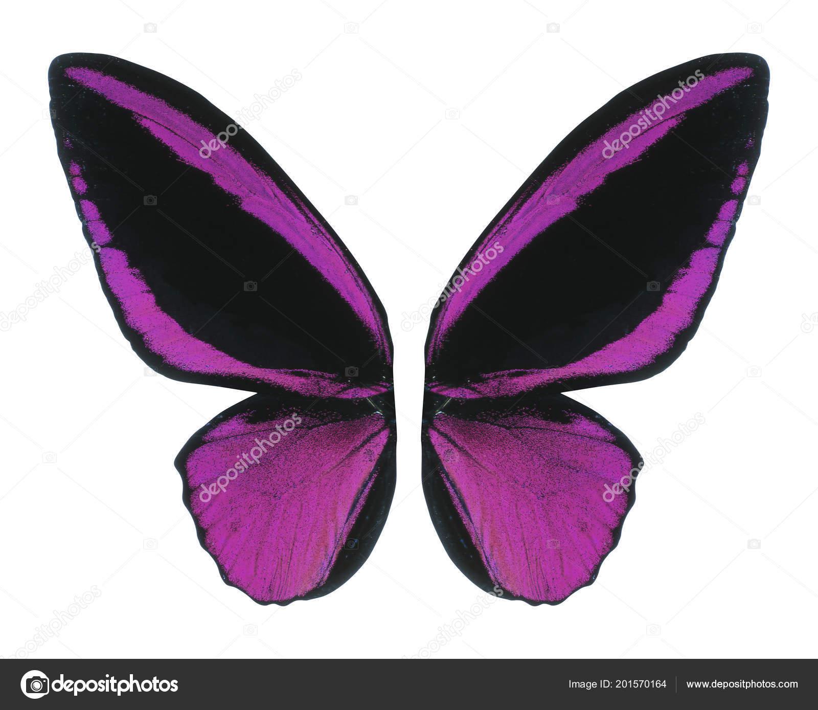 Aile De Papillon ailes papillon isolés sur fond blanc — photographie ozaiachinn