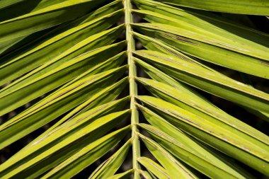green palm leaf  on background