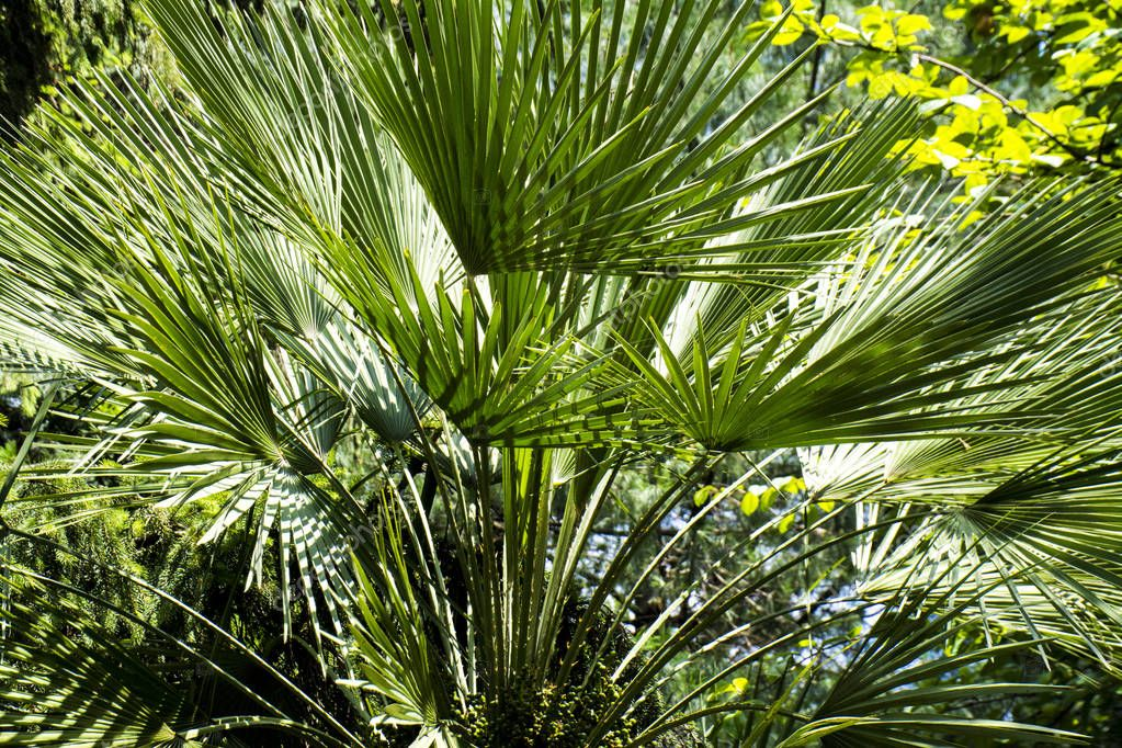 green palm leaves close up, nature background