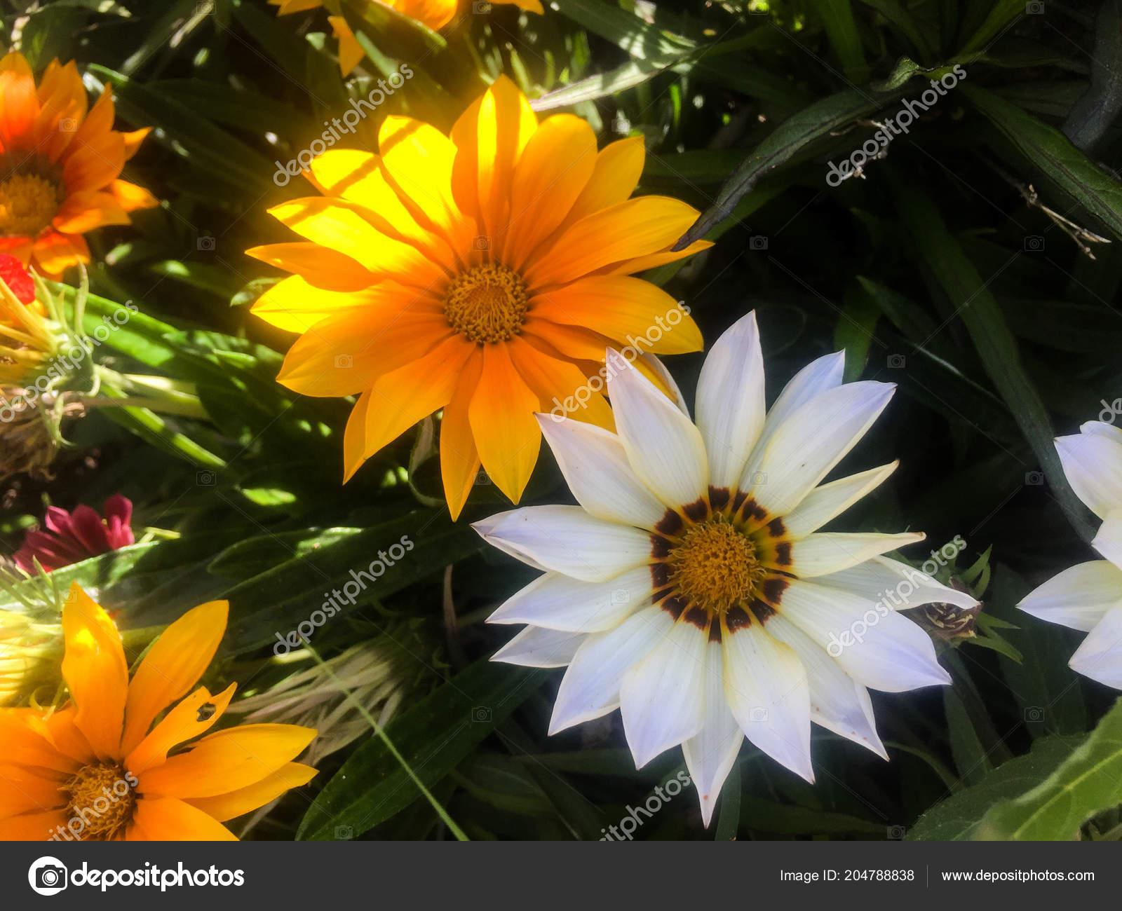 Beautiful Flowers Close View Stock Photo Ozaiachinn 204788838