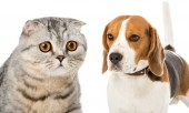 Fotografie Collage aus Katze und Hund isoliert auf Weiß