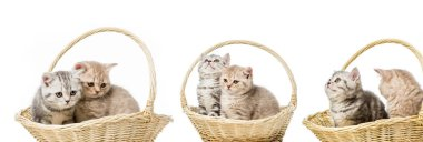 Collage of cats in basket isolated on white stock vector
