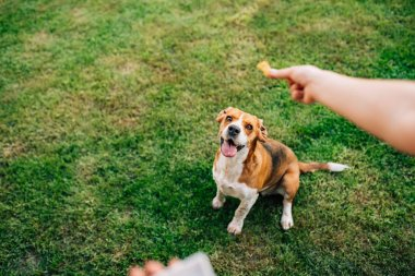 Hand of woman feeding happy dog with treats.