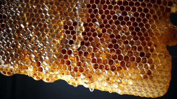 Honig fließt die Wabe hinunter. frischer Honig tropft auf den Hintergrund.