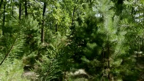 Zelené listnaté a jehličnaté stromy v lese. Zelené plochy.