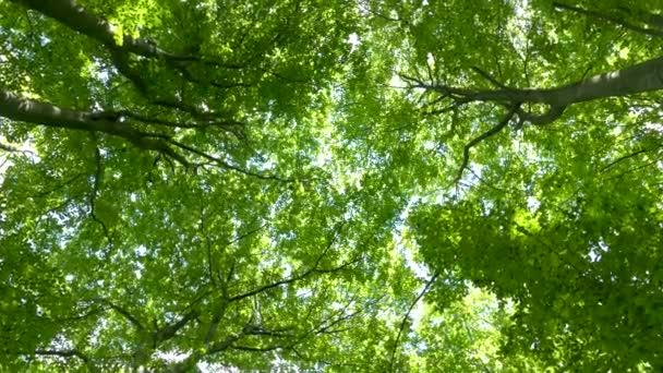 Pohled pod stromy v lese. Zelené pozadí z větví stromů a listí. Sluneční paprsky prosvítají listím. Krásná příroda a ekologie.