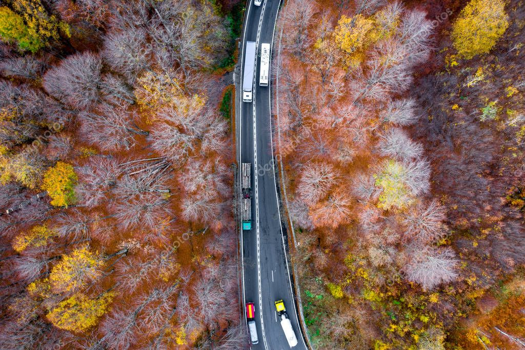 Trucks on road in the middle of a forest in fall season