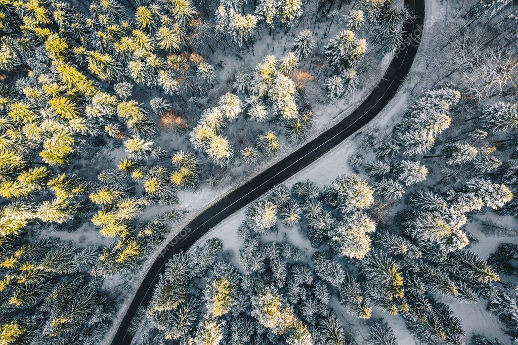 Empty road trough a forest in winter season