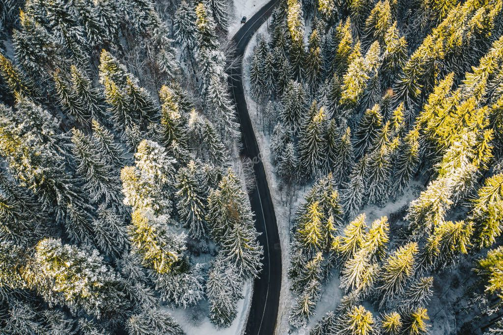 Snow covered forest with road