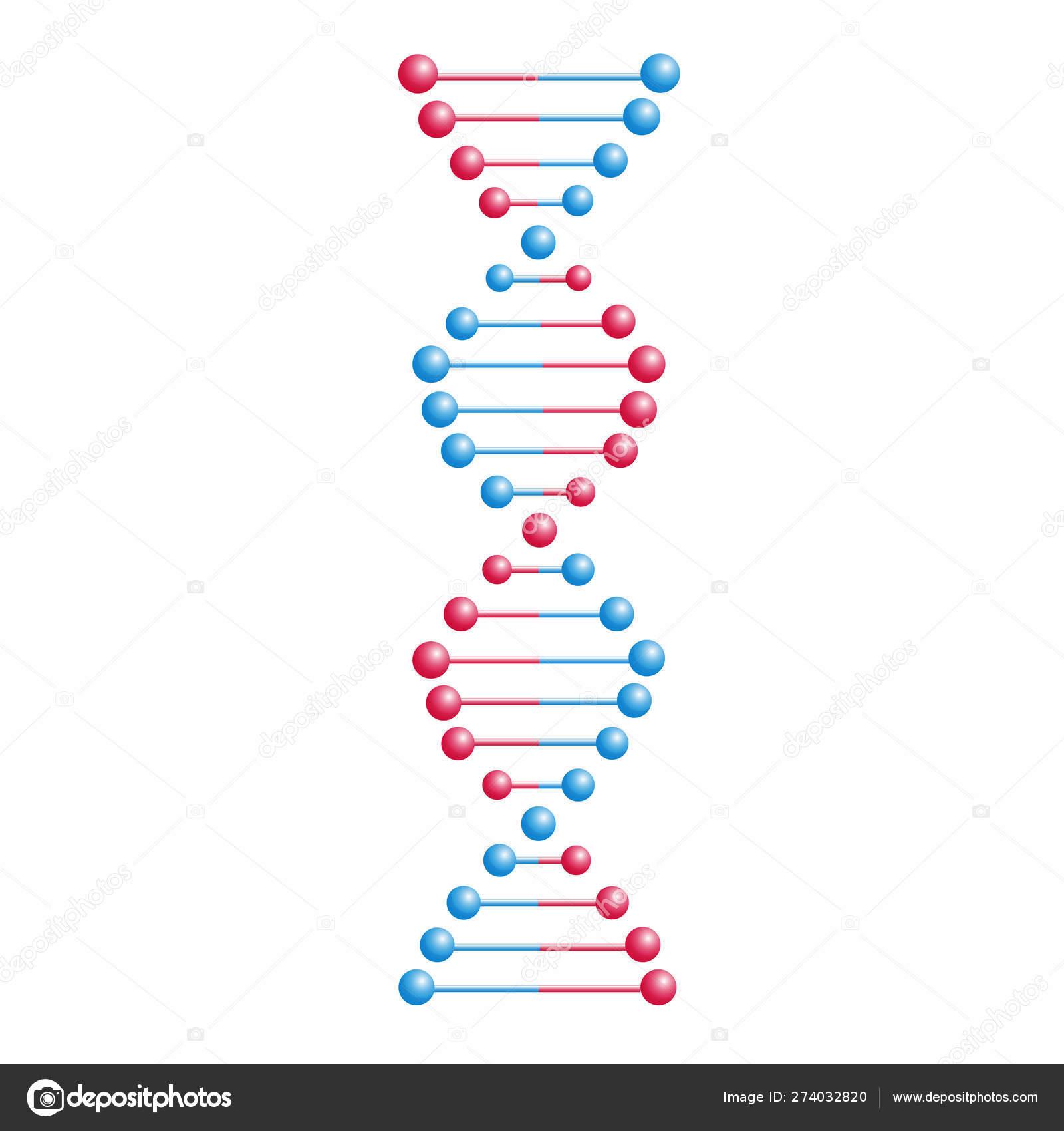 Molécula De Adn Vectorial Estructura Con Cromosomas Hélice