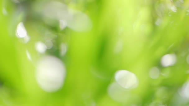 Abstract green grass background