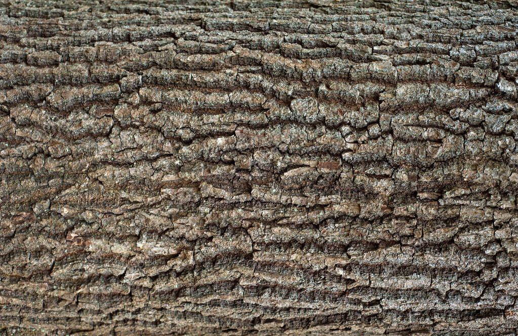 Embossed texture of the brown bark of a tree with green moss and lichen on it. Expanded circular panorama of the bark of an oak.