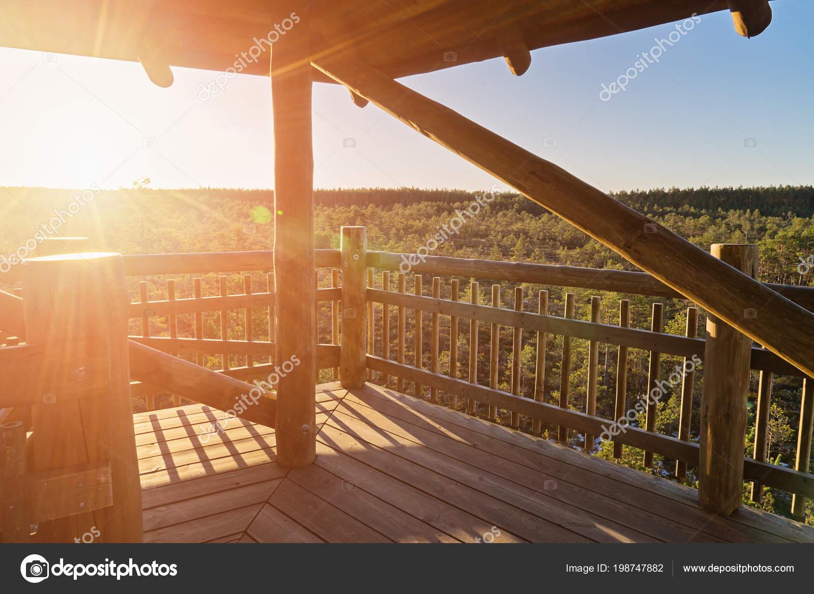 Uitzicht herfst pine forest observatie toren met stralen van