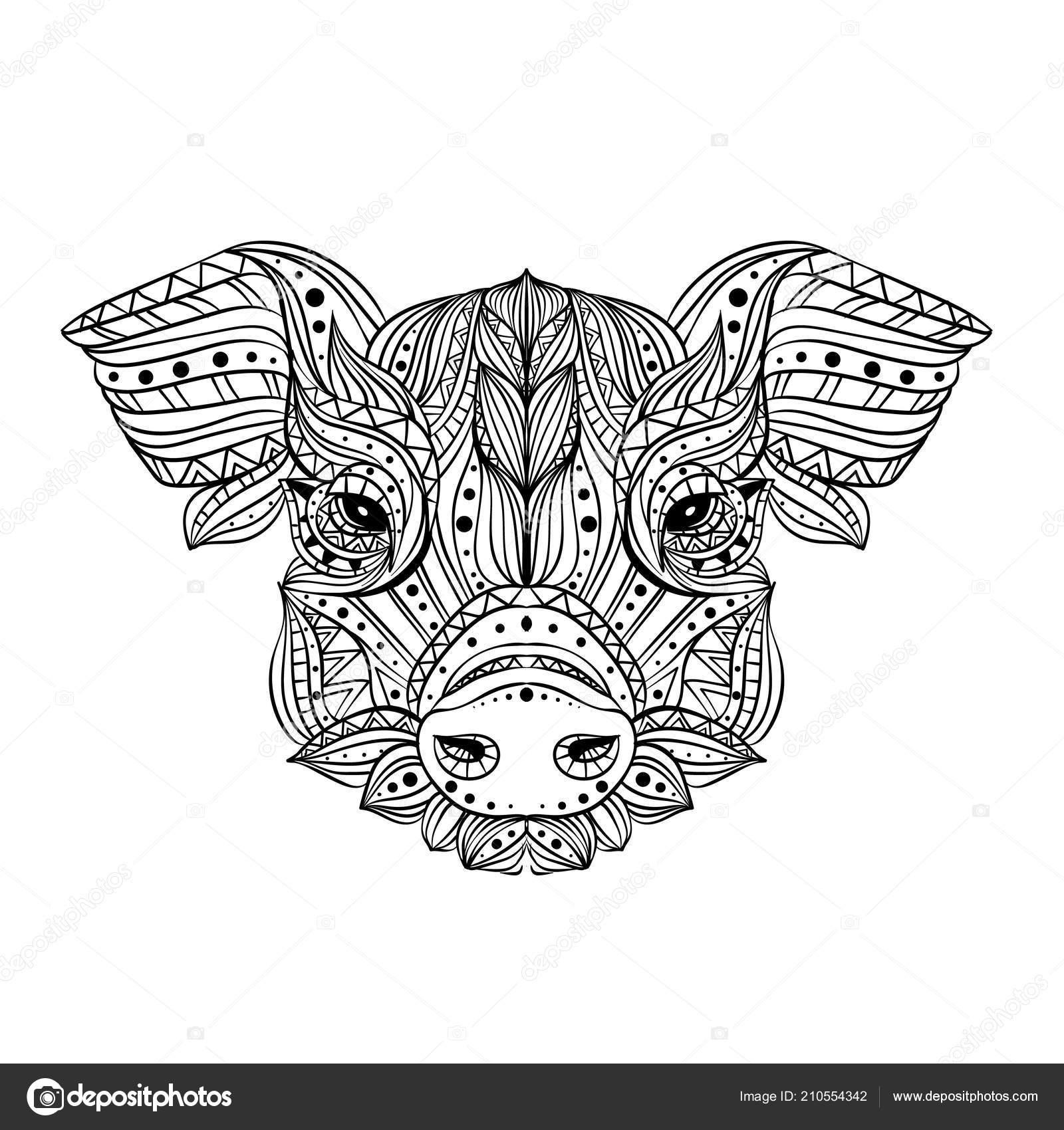 Cabeza Jabali Meditacion Colorante Mandala Cabeza Chancho Con Pelo