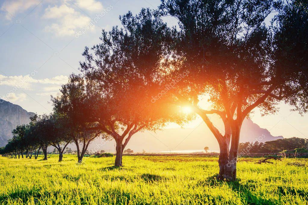 Tree shadow with sunset. Beauty world. Sicily Italy Europe