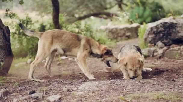 Dva velké psi hrají, detailní mladých a šťastný pes v boji