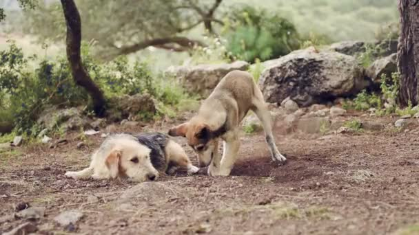 Two big dogs are playing, closeup of young and happy dog in fight
