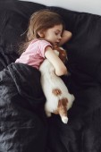 Little girl with a puppy lying in the bad at home. Jack Russell Terrier Puppy sleeps near a child.
