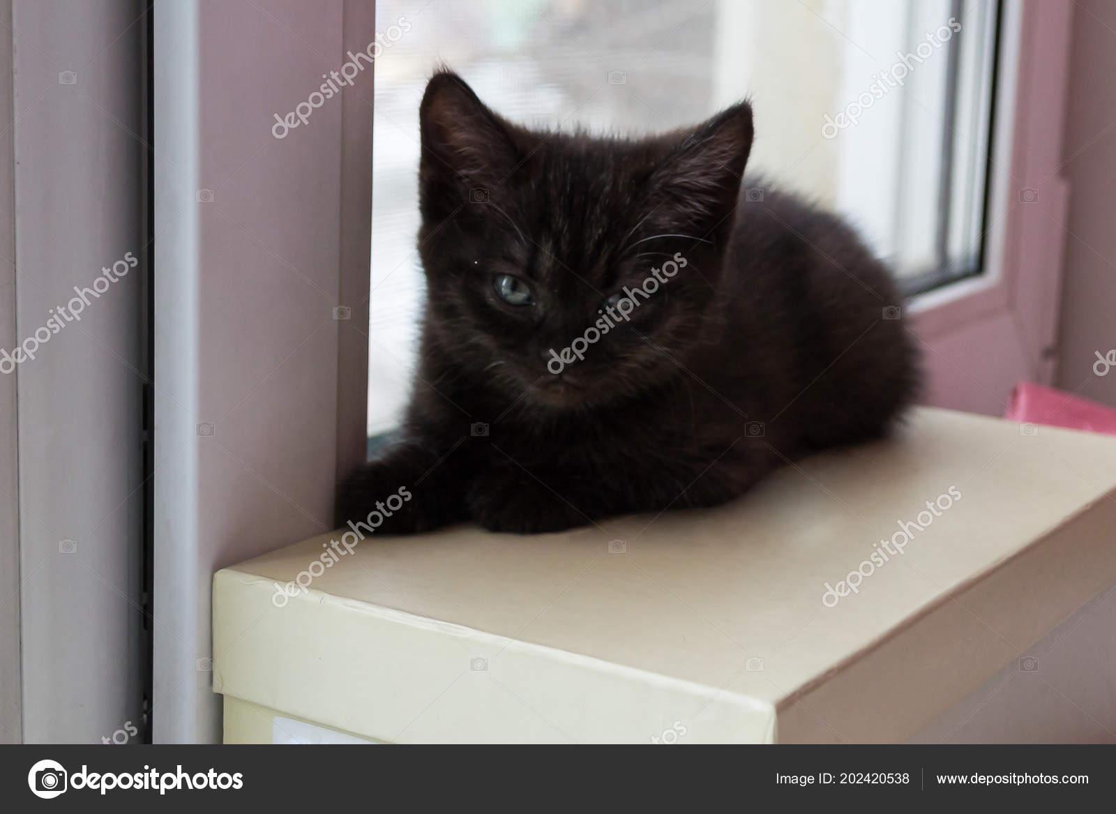 stáhnout černé kočička obrázky