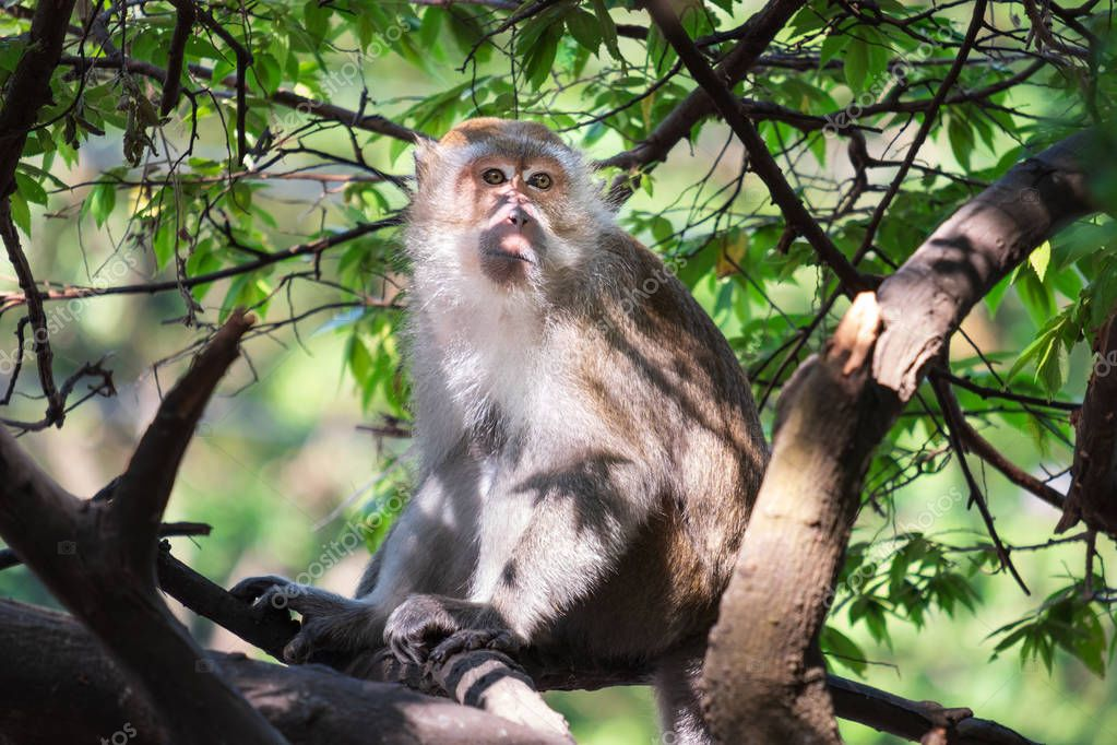 A cute monkey lives in a natural forest of Thailand.