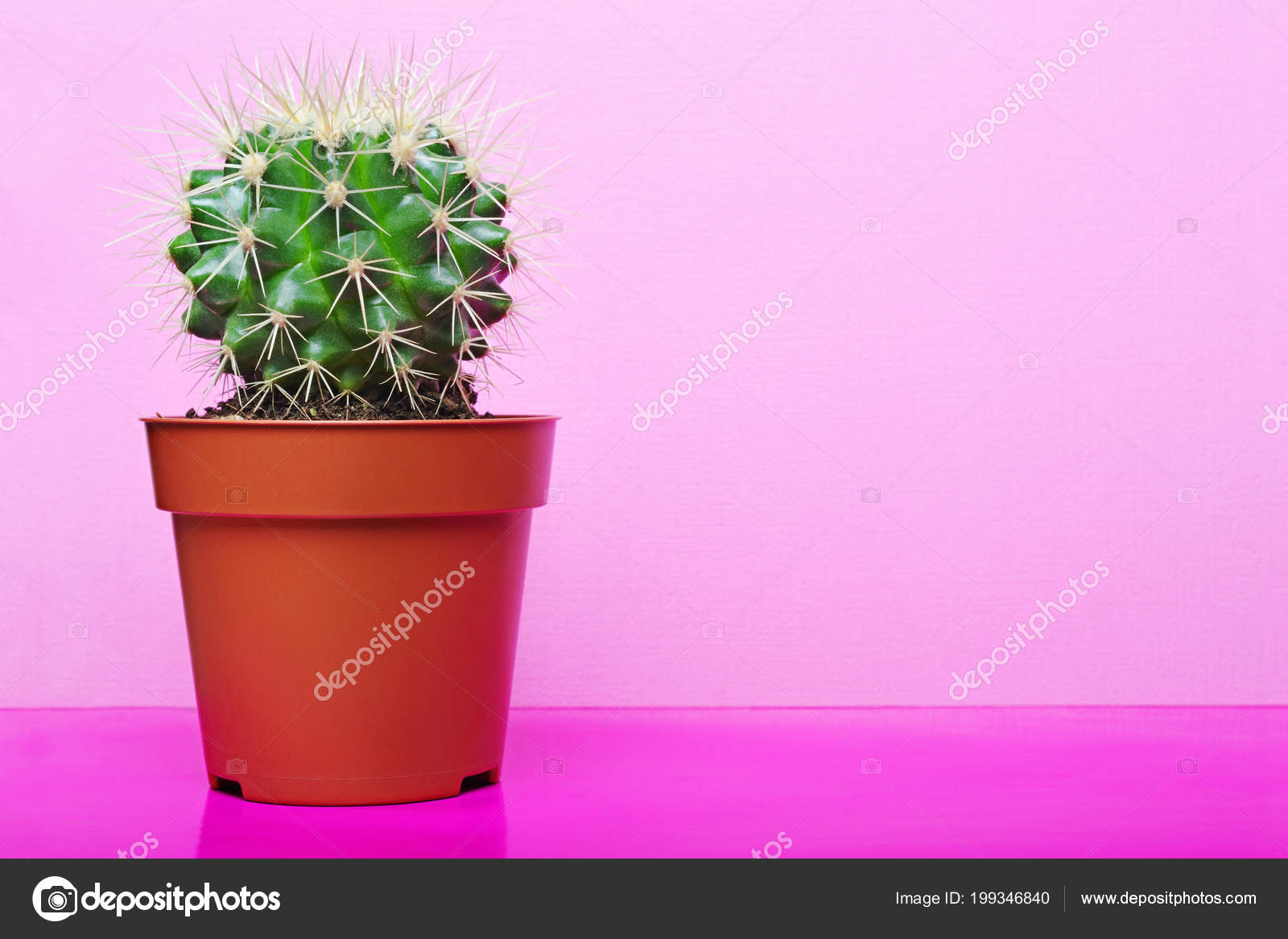 Small green cactus red flower pot copy space bright pink stock small green cactus red flower pot copy space bright pink stock photo mightylinksfo