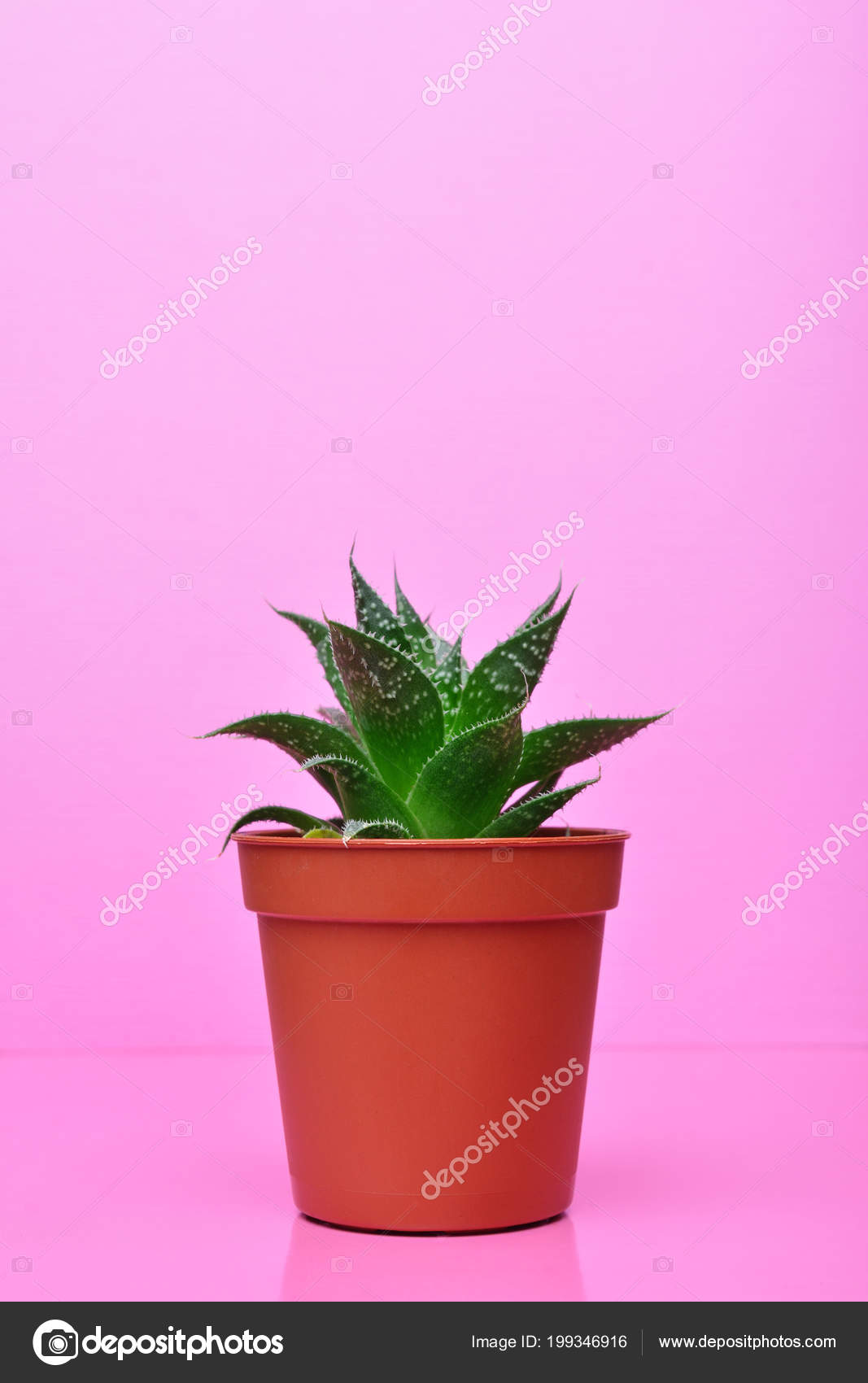 Small green succulent red flower pot bright pink background stock small green succulent red flower pot bright pink background stock photo mightylinksfo