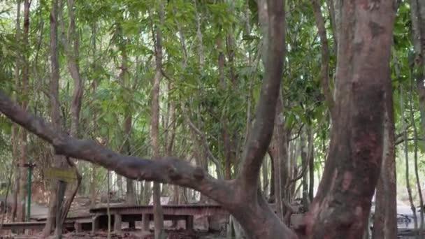 Zpomalený pohyb dolly zastřelil krásné lesy a malý vodopád s vodou tekoucí přes zelené kameny na smaragdové jezírko v Krabi. Tropická vodopád s malým potokem v deštném pralese v jihu Thajska