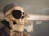 A dressed up pirate skeleton with eye patch, and parrot.