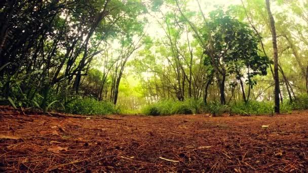Široký úhel pohledu turistická stezka podél strom lemované pralesy